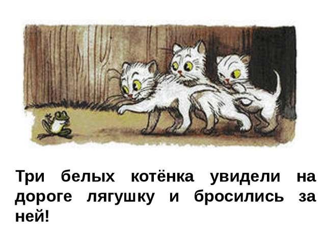 Три белых котёнка увидели на дороге лягушку и бросились за ней!