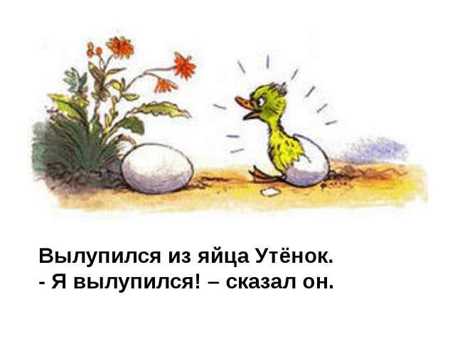 Вылупился из яйца Утёнок. - Я вылупился! – сказал он.