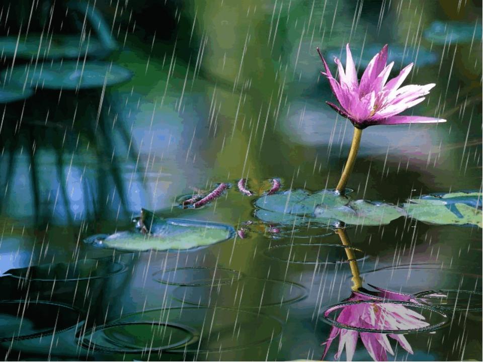 Картинки анимация летнего дождя