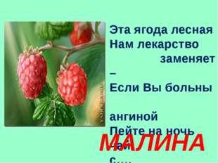 Эта ягода лесная Нам лекарство заменяет – Если Вы больны ангиной Пейте на ноч