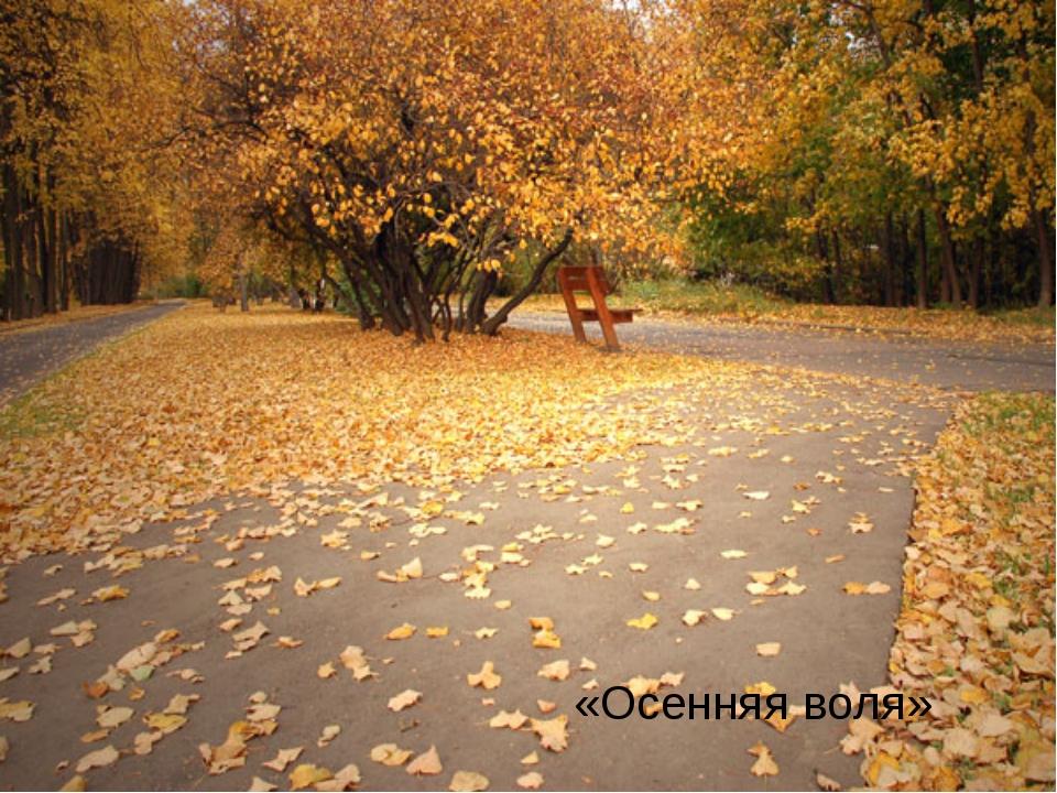 «Осенняя воля»