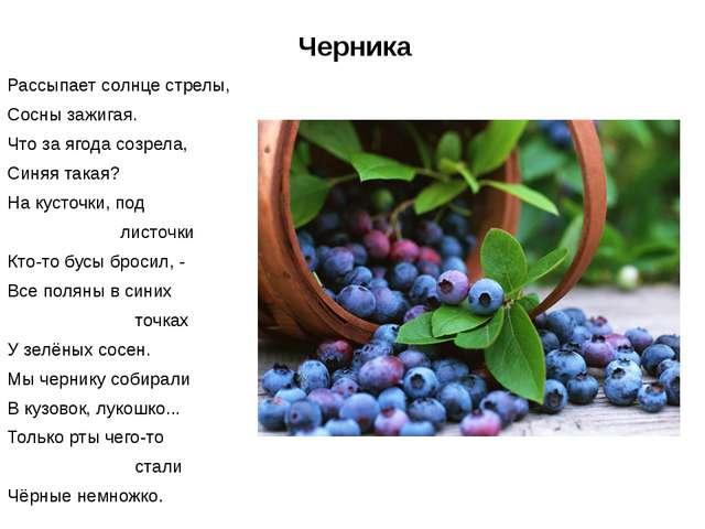 Черника Рассыпает солнце стрелы, Сосны зажигая. Что за ягода созрела, Синяя т...