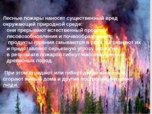Лесные пожары наносят существенный вред окружающей природной среде: они прер