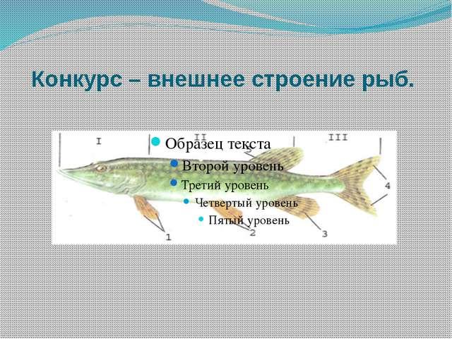 Конкурс – внешнее строение рыб.
