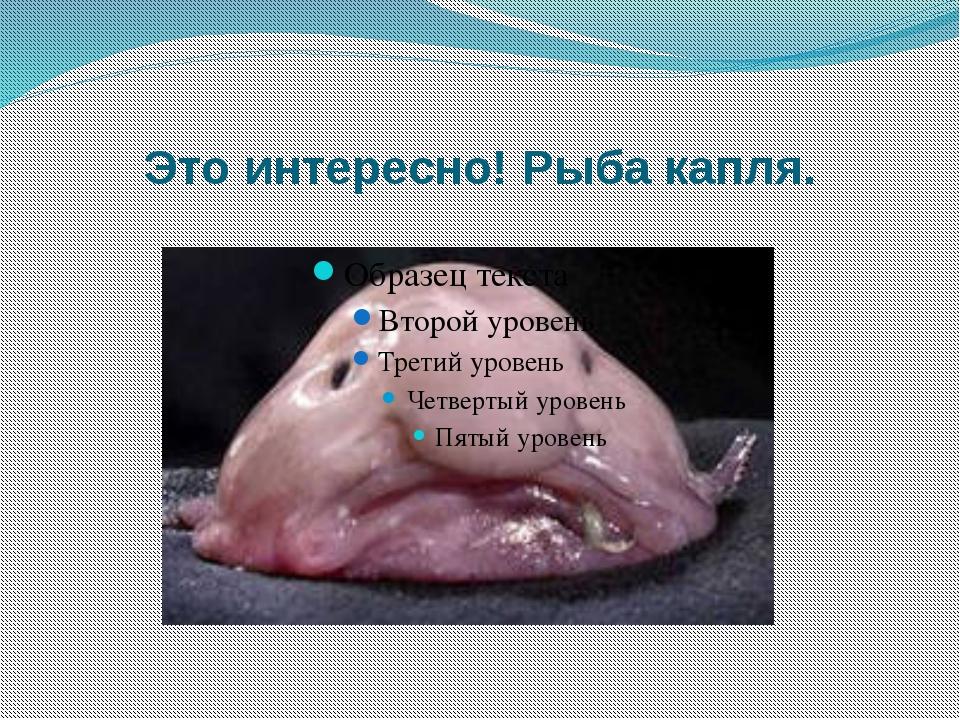Это интересно! Рыба капля.