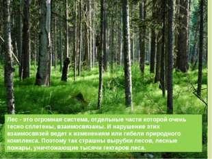 Лес - это огромная система, отдельные части которой очень тесно сплетены, вза