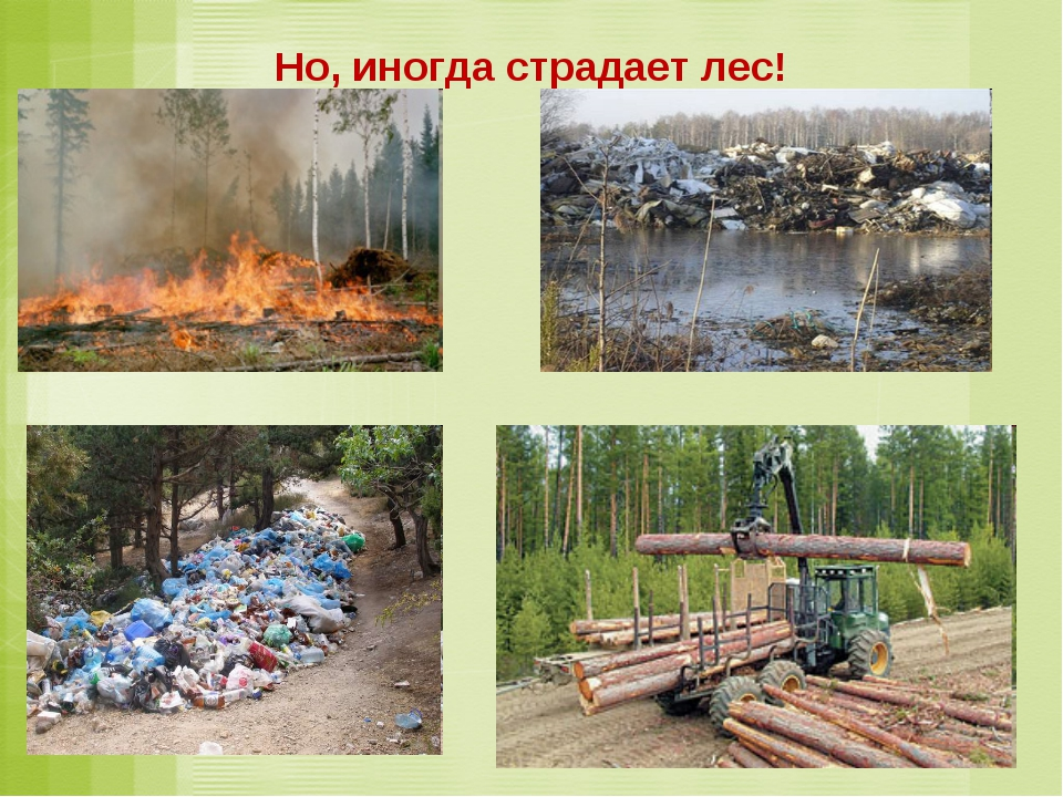 Но, иногда страдает лес!