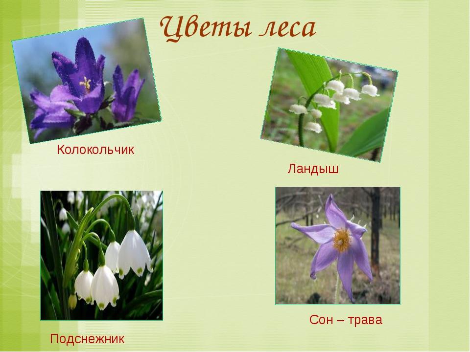 Цветы леса Колокольчик Ландыш Сон – трава Подснежник