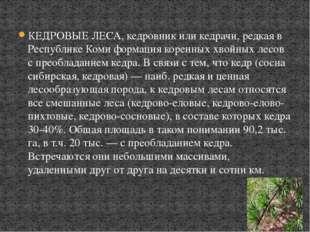 КЕДРОВЫЕ ЛЕСА, кедровник или кедрачи, редкая в Республике Коми формация корен