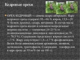 ОРЕХ КЕДРОВЫЙ — семена кедра сибирского. Ядро кедрового ореха содержит 55—66