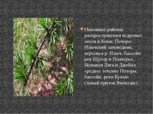 Основные районы распространения кедровых лесов в Коми: Печоро-Илычский запове