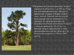 Кедровые леса разновозрастные, возраст деревьев колеблетсяот 1 до 400 лет. Ке