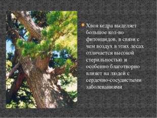 Хвоя кедра выделяет большое кол-во фитонцидов, в связи с чем воздух в этих ле