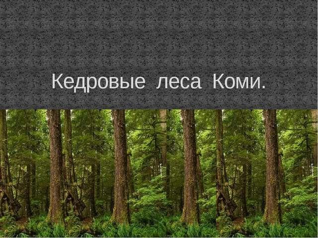 Кедровые леса Коми.