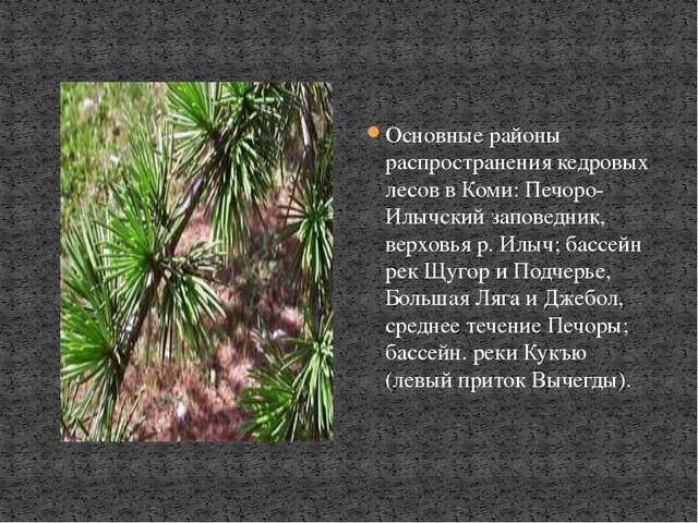 Основные районы распространения кедровых лесов в Коми: Печоро-Илычский запове...