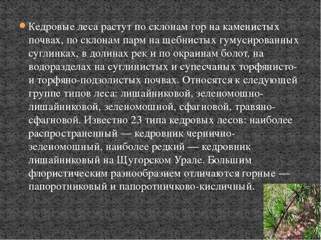 Кедровые леса растут по склонам гор на каменистых почвах, по склонам парм на...