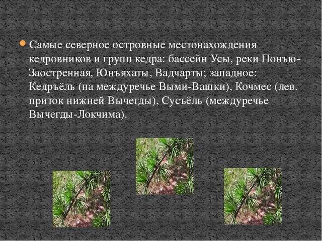 Самые северное островные местонахождения кедровников и групп кедра: бассейн У...