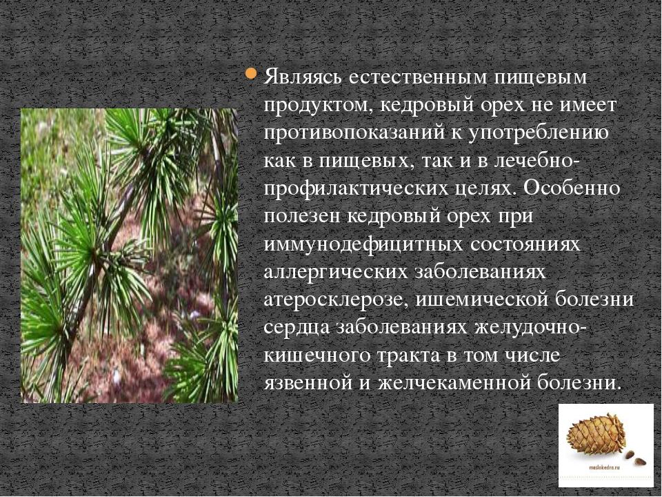 Являясь естественным пищевым продуктом, кедровый орех не имеет противопоказан...