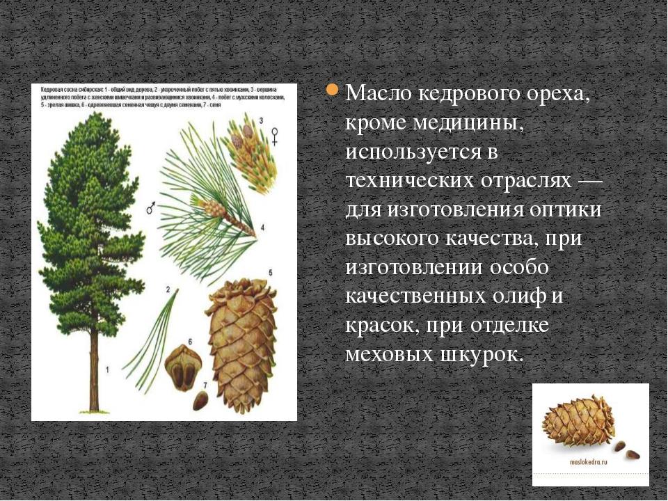 Масло кедрового ореха, кроме медицины, используется в технических отраслях —...