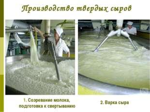 Производство твердых сыров 1. Созревание молока, подготовка к свертыванию 2.