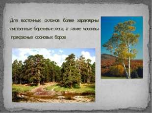 Для восточных склонов более характерны лиственные березовые леса, а также мас