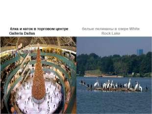 ёлка и каток в торговом центре Galleria Dallas белые пеликаны в озере White