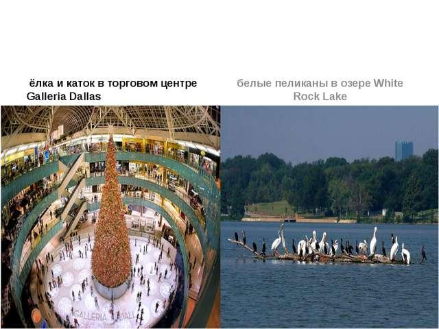 ёлка и каток в торговом центре Galleria Dallas белые пеликаны в озере White...