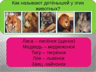 Как называют детёнышей у этих животных? Лиса – лисёнок (щенок) Медведь – медв