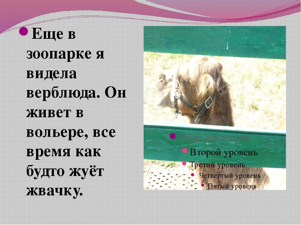 Еще в зоопарке я видела верблюда. Он живет в вольере, все время как будто жуё...