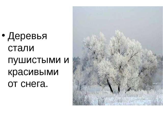 Деревья стали пушистыми и красивыми от снега.