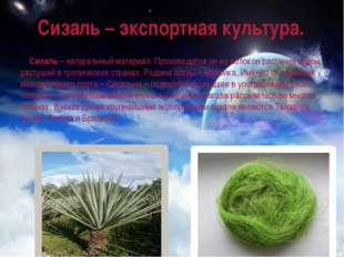 Сизаль – экспортная культура. Сизаль– натуральный материал. Производится он