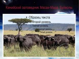 Кенийский заповедник Масаи-Мара. Буйволы.