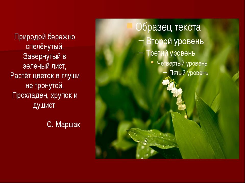 Природой бережно спелёнутый, Завернутый в зеленый лист, Растёт цветок в глуши...