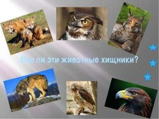 Все ли эти животные хищники?