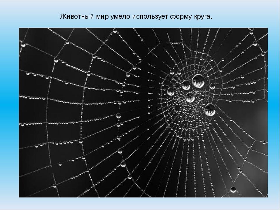 Животный мир умело использует форму круга.