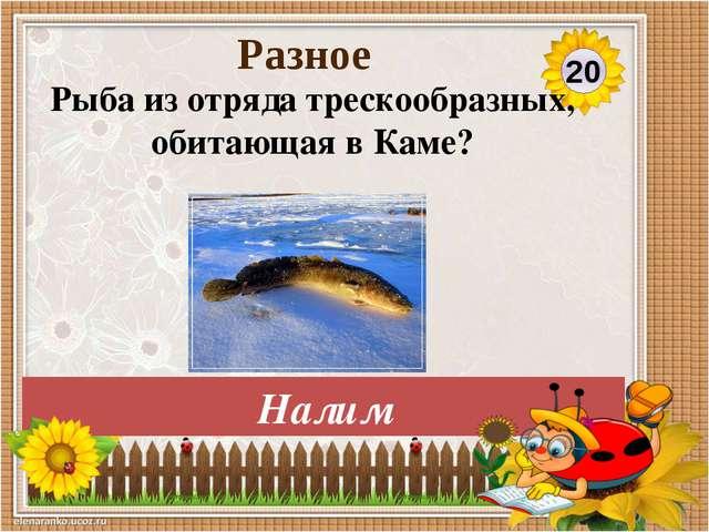 Яик 30 Разное Назовите старое название реки Урал?