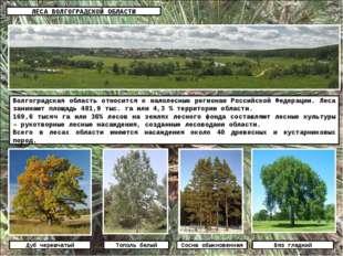ЛЕСА ВОЛГОГРАДСКОЙ ОБЛАСТИ Волгоградская область относится к малолесным регио
