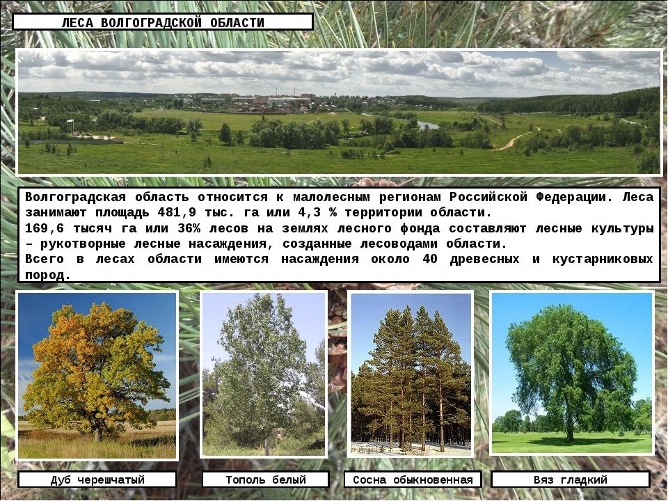 ЛЕСА ВОЛГОГРАДСКОЙ ОБЛАСТИ Волгоградская область относится к малолесным регио...