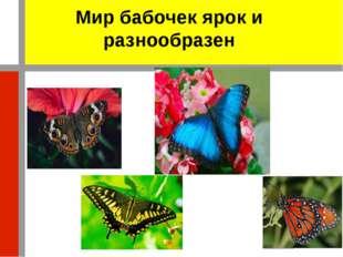 Мир бабочек ярок и разнообразен