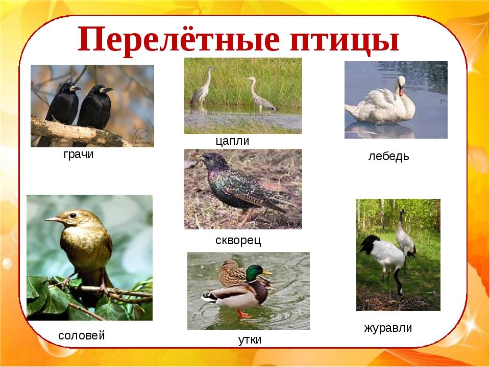 грачи лебедь журавли соловей скворец утки цапли Перелётные птицы