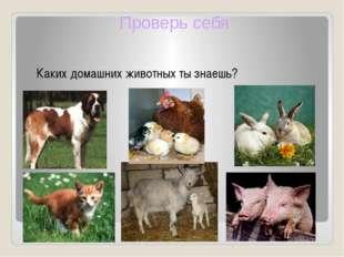 Каких домашних животных ты знаешь? Проверь себя