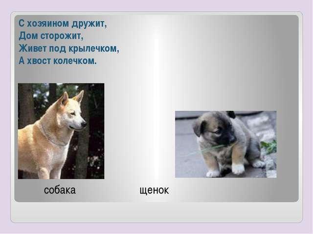 С хозяином дружит, Дом сторожит, Живет под крылечком, А хвост колечком. собак...