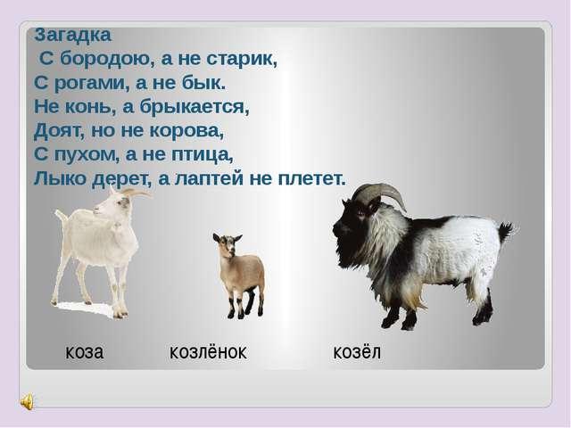 Загадка С бородою, а не старик, С рогами, а не бык. Не конь, а брыкается, Доя...