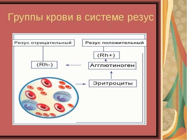 Wo stumbled: зависимость группы крови и резуса ребенка
