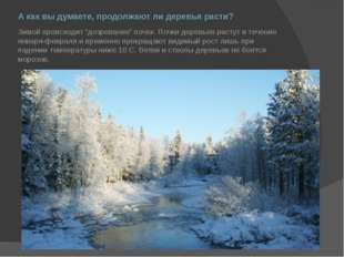 """А как вы думаете, продолжают ли деревья расти? Зимой происходит """"дозревание"""""""