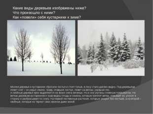 Какие виды деревьев изображены ниже? Что произошло с ними? Как «повели» себя