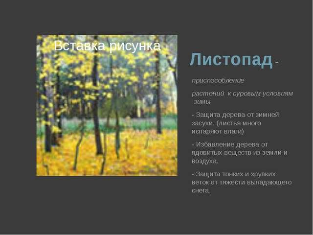 Листопад - приспособление  растений к суровым условиям зимы - Защита дере...