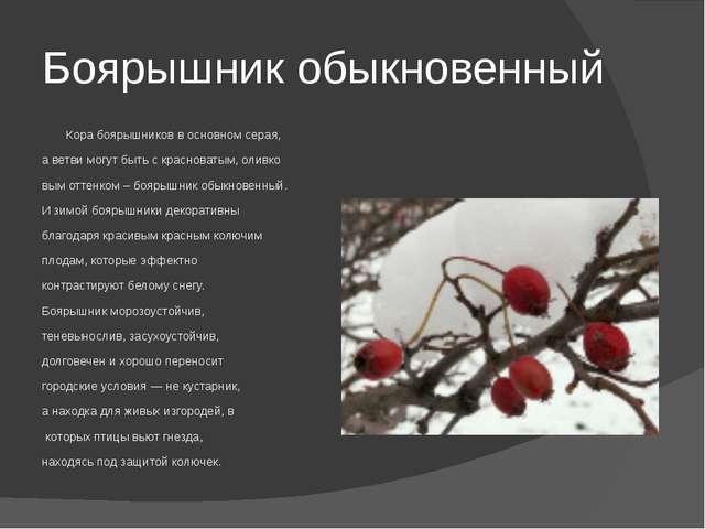 Боярышник обыкновенный Кора боярышников в основном серая, а ветви могут быть...