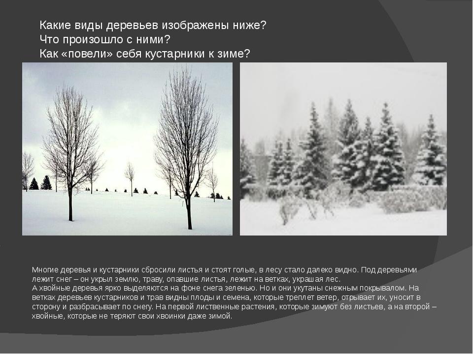 Какие виды деревьев изображены ниже? Что произошло с ними? Как «повели» себя...