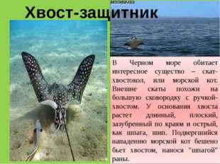 Хвост-защитник В Черном море обитает интересное существо – скат-хвостокол, ил